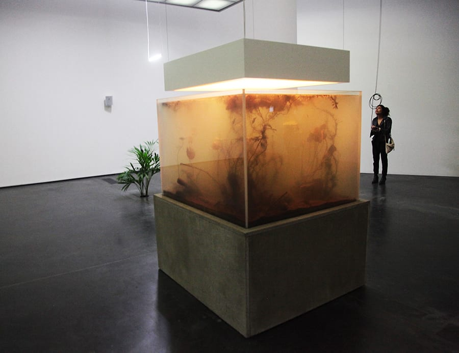 Switchable Smart Glass aquarium in art gallery